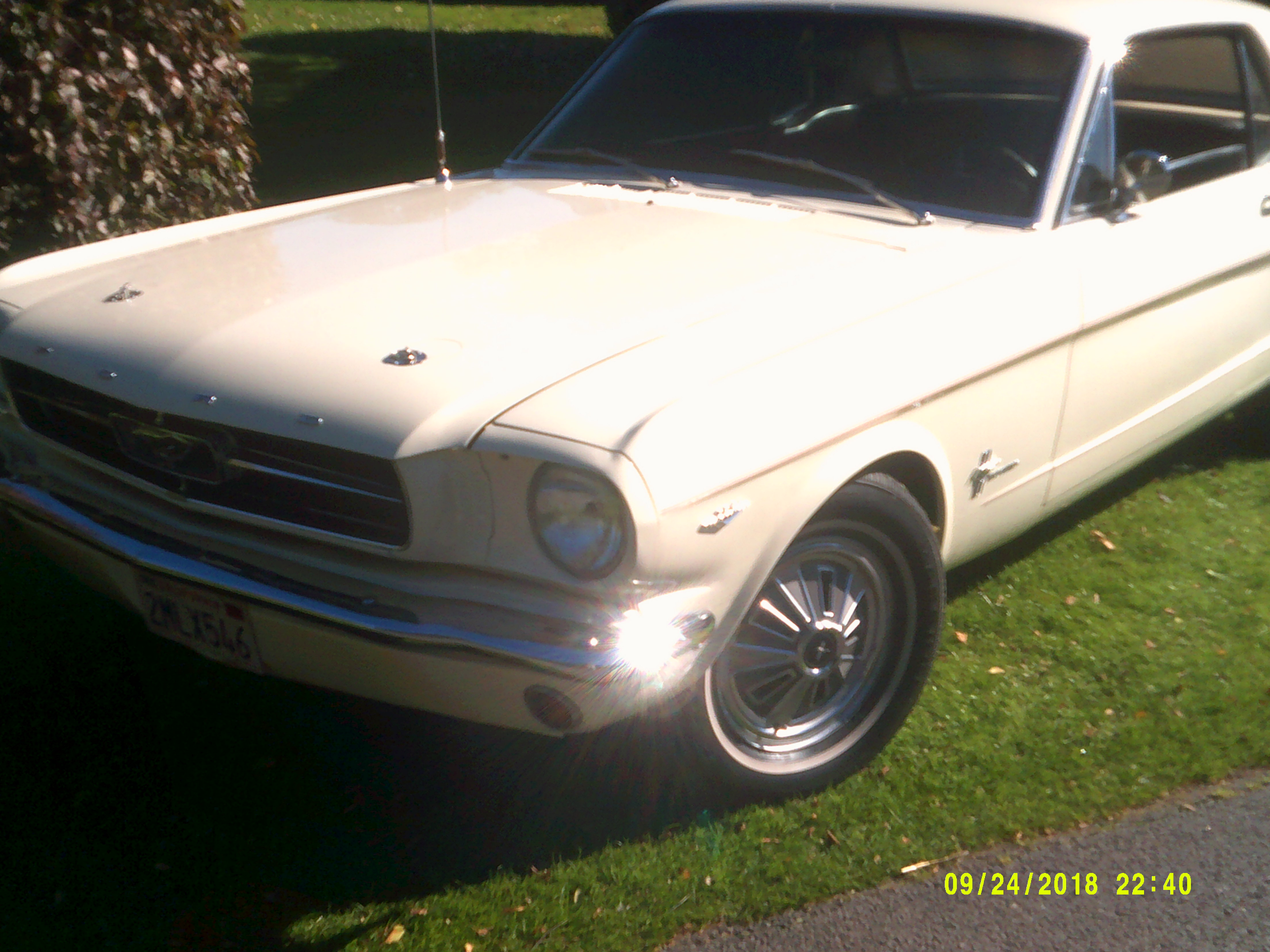 FORD MUSTANG 289 1965 - Carnell Classic Cars